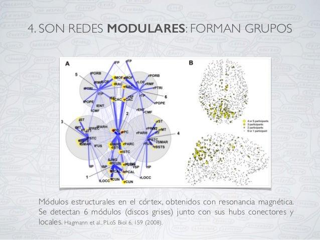 Módulos estructurales en el córtex, obtenidos con resonancia magnética. Se detectan 6 módulos (discos grises) junto con su...