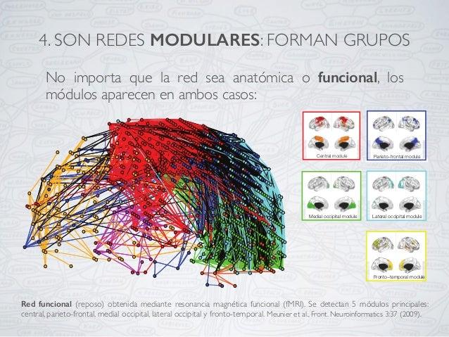 Red funcional (reposo) obtenida mediante resonancia magnética funcional (fMRI). Se detectan 5 módulos principales: central...