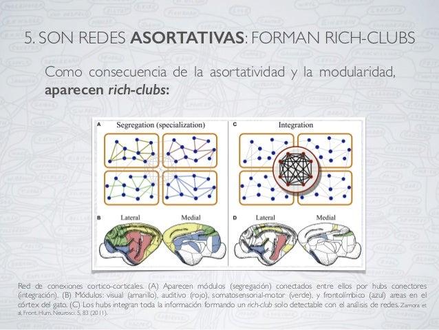 Como consecuencia de la asortatividad y la modularidad, aparecen rich-clubs: Red de conexiones cortico-corticales. (A) Apa...