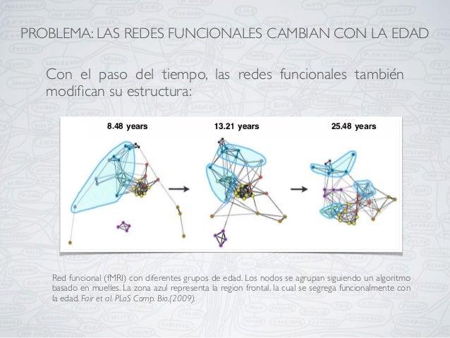 Red funcional (fMRI) con diferentes grupos de edad. Los nodos se agrupan siguiendo un algoritmo basado en muelles. La zona...