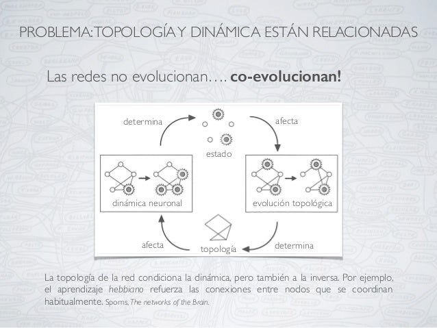 La topología de la red condiciona la dinámica, pero también a la inversa. Por ejemplo, el aprendizaje hebbiano refuerza la...