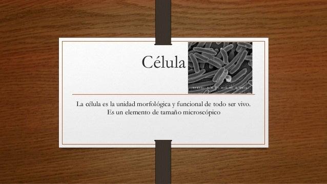 Célula La célula es la unidad morfológica y funcional de todo ser vivo. Es un elemento de tamaño microscópico