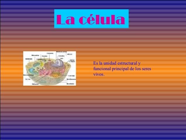 La célula Es la unidad estructural y funcional principal de los seres vivos.