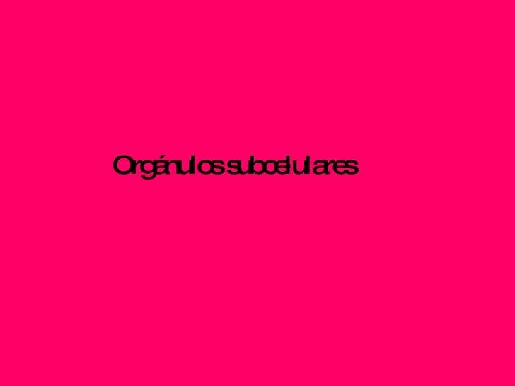 Orgánulos subcelulares