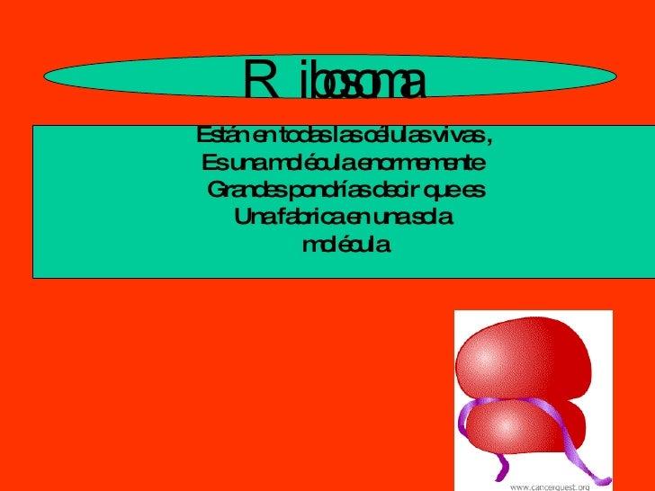 R ibosoma Están en todas las células vivas , Es una molécula enormemente  Grandes pondrías decir que es Una fabrica en una...