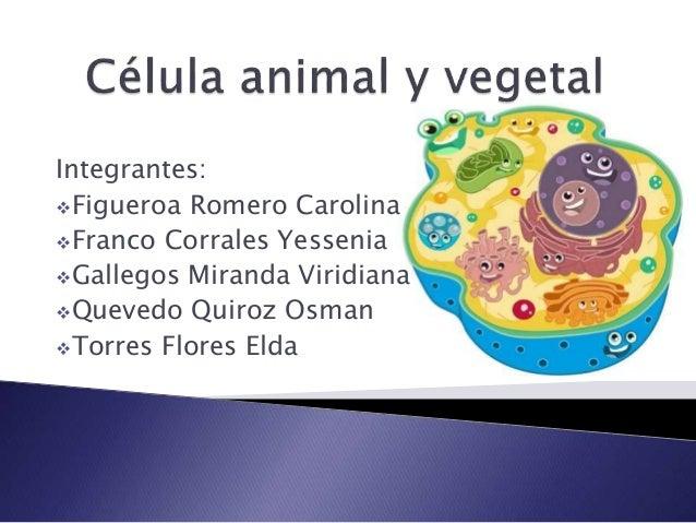 Integrantes: Figueroa Romero Carolina Franco Corrales Yessenia Gallegos Miranda Viridiana Quevedo Quiroz Osman Torres...