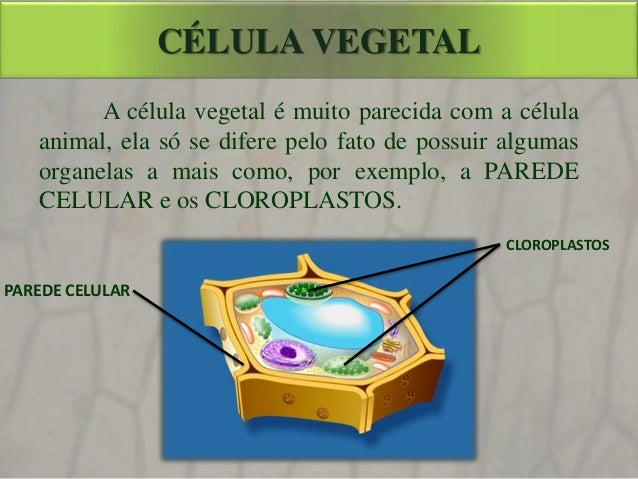 Célula Eucarionte Vegetal