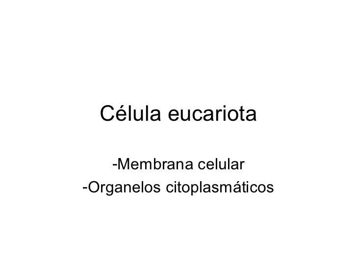 Célula eucariota    -Membrana celular-Organelos citoplasmáticos