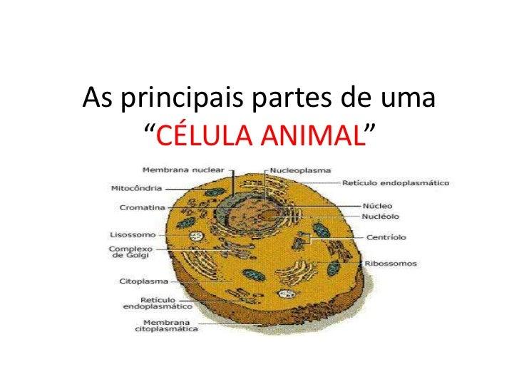 """As principais partes de uma     """"CÉLULA ANIMAL"""""""