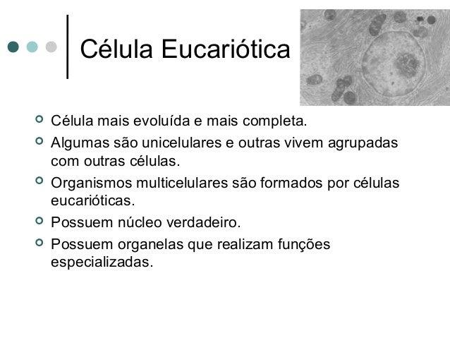 Célula Eucariótica  Célula mais evoluída e mais completa.  Algumas são unicelulares e outras vivem agrupadas com outras ...