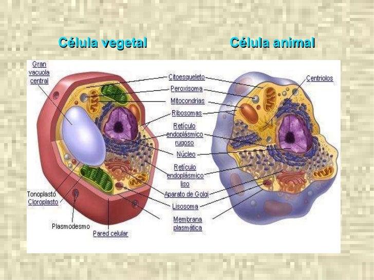 Celula Animal 3d