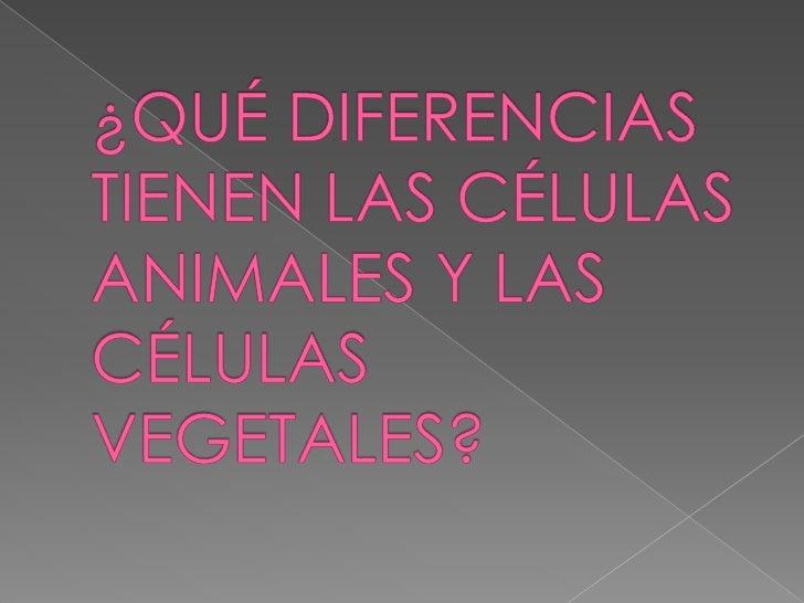 ¿QUÉ DIFERENCIAS TIENEN LAS CÉLULAS ANIMALES Y LAS CÉLULAS VEGETALES? <br />