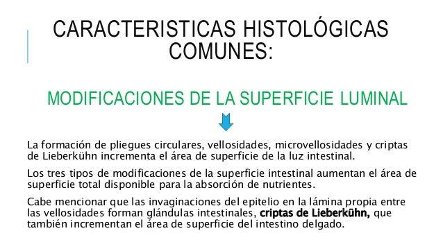 Células del intestino delgado