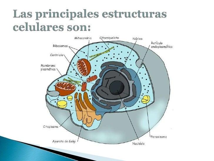 Organelos de la celula eucariota yahoo dating