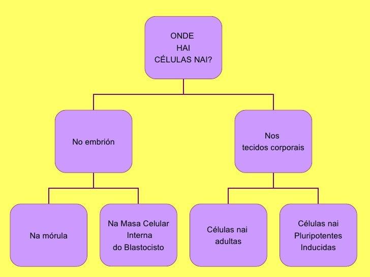 CéLulas Nai Ou Troncais Slide 3