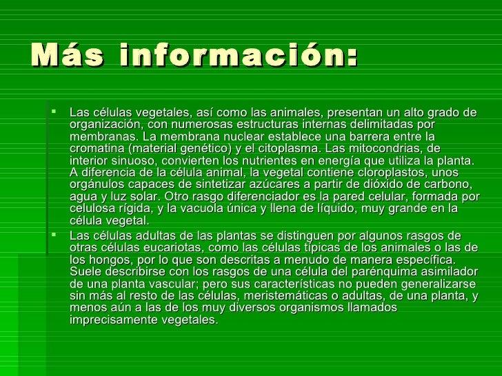 C lulas vegetales - Informacion sobre la fibra vegetal ...