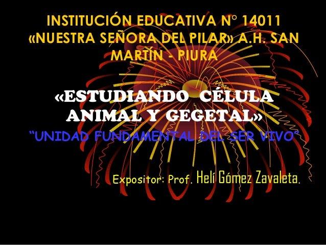 """INSTITUCIÓN EDUCATIVA N° 14011«NUESTRA SEÑORA DEL PILAR» A.H. SANMARTÍN - PIURA«ESTUDIANDO CÉLULAANIMAL Y GEGETAL»""""UNIDAD ..."""