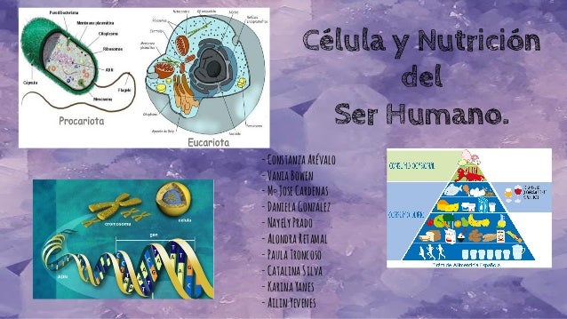 Célula y Nutrición del Ser Humano. -ConstanzaArévalo -VaniaBowen -M°JoseCardenas -DanielaGonzalez -NayeLyPrado -AlondraRet...