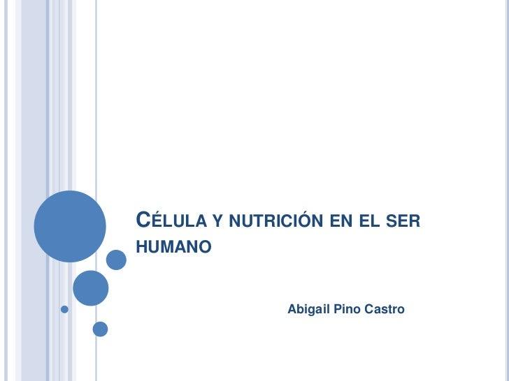 Célula y nutrición en el ser humano <br />Abigail Pino Castro<br />