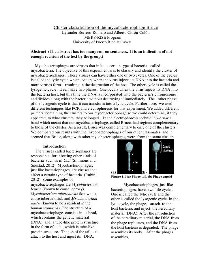 Cluster classification of the mycobacteriophage Bruce                    Lysander Borrero-Romero and Alberto Citrón-Colón ...