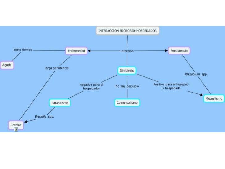 Cmap interacción microbio hospedador