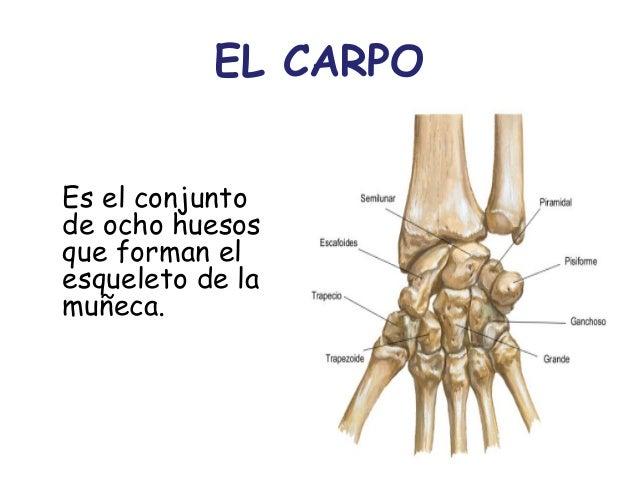Cmc anato - iv anatomia del sistema oseo- sal