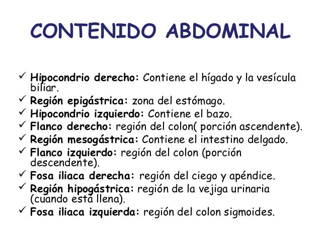 Anatomía del Abdomen