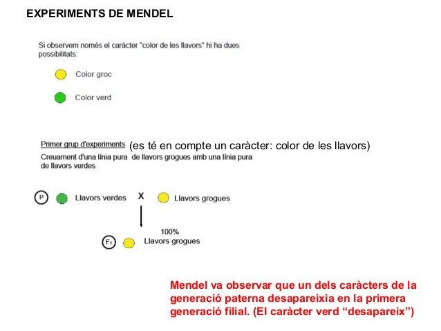 EXPERIMENTS DE MENDEL              (es té en compte un caràcter: color de les llavors)                      Mendel va obse...