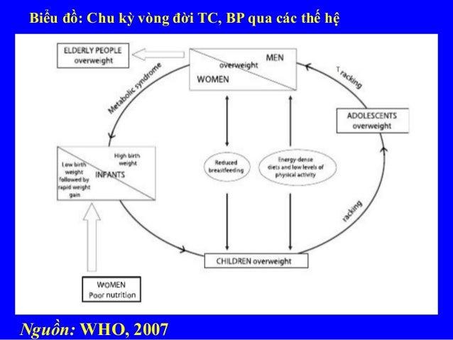 Biểu đồ: Chu kỳ vòng đời TC, BP qua các thế hệ Nguồn: WHO, 2007