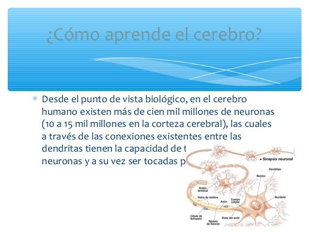 ∗ Desde el punto de vista biológico, en el cerebrohumano existen más de cien mil millones de neuronas(10 a 15 mil millones...