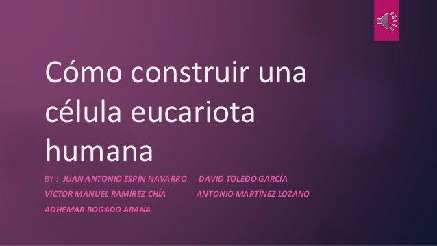 Cómo construir una célula eucariota humana BY : JUAN ANTONIO ESPÍN NAVARRO DAVID TOLEDO GARCÍA VÍCTOR MANUEL RAMÍREZ CHÍA ...