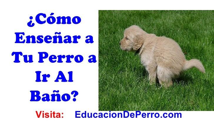 ¿CómoEnseñar aTu Perro a  Ir Al  Baño?  Visita:   EducacionDePerro.com