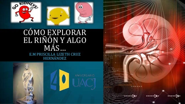 CÓMO EXPLORAR EL RIÑÓN Y ALGO MÁS… E.M PRISCILLA LIZETH CRUZ HERNÁNDEZ