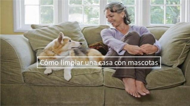 C mo limpiar una casa con mascotas - Como limpiar mi casa ...