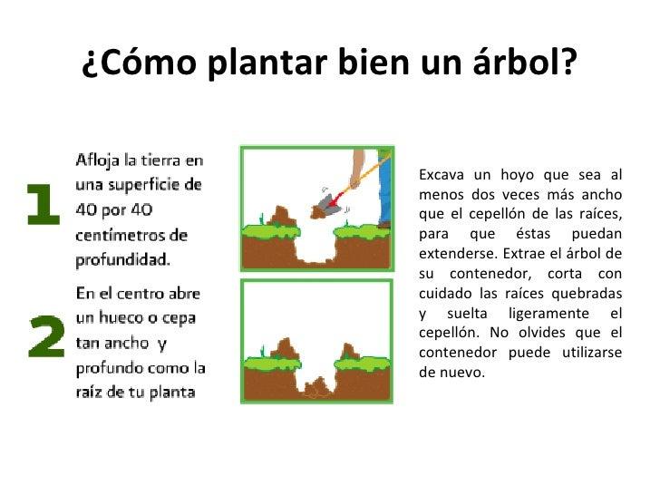 C mo plantar un rbol for Pasos para sembrar una planta