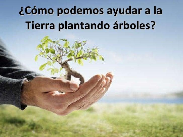¿Cómo podemos ayudar a la Tierra plantando árboles?