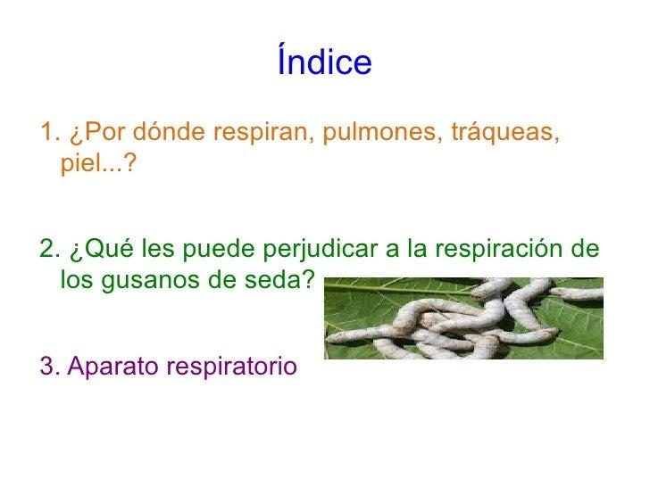 como respiran los gusanos