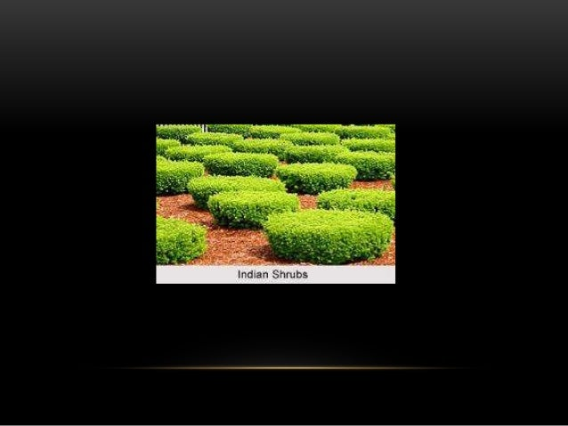 FLOWER BED • Dense growth of herbaceous annuals producing beautiful flowers in a small compartment is called flower bed. •...