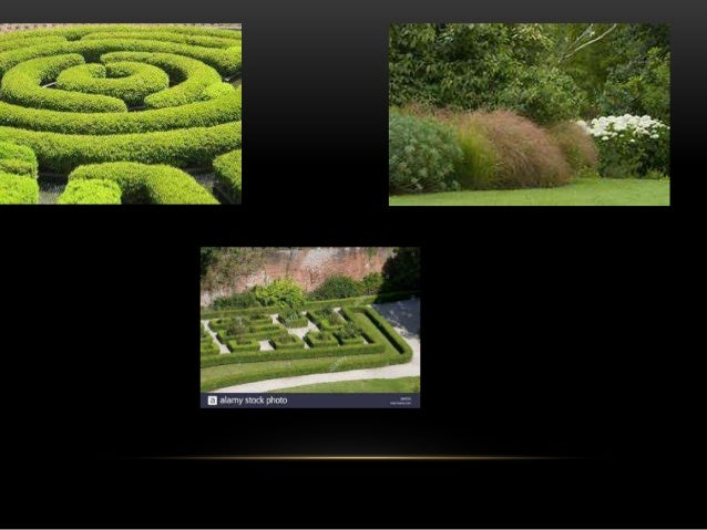 """ORNAMENTAL HEDGES • A """"hedge"""" is a wall composed of plants. Some are purely decorative, while others serve primarily a pra..."""