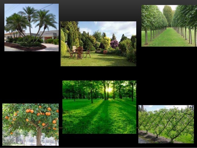 SELECTION OF TREES • Various forms of ornamental trees are:  Columnar/erect tree: is good for planting in narrow side yar...