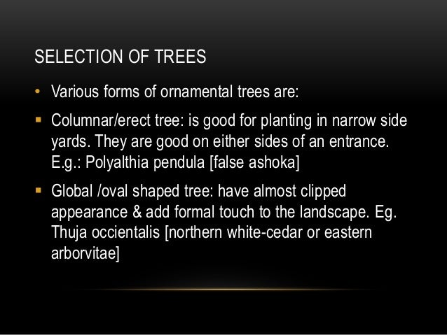 • Vase shaped trees: look beautiful with their grey branches. Many of the deciduous trees are vase- shaped. Eg: Pithecolob...