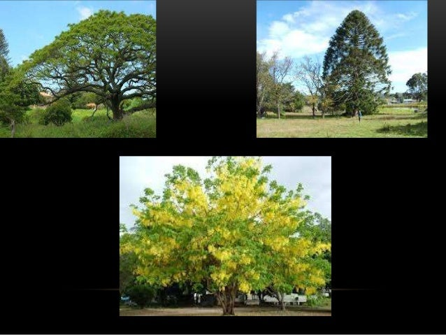 • According to the size, shrubs may be classified into three: o Small o Medium o Large