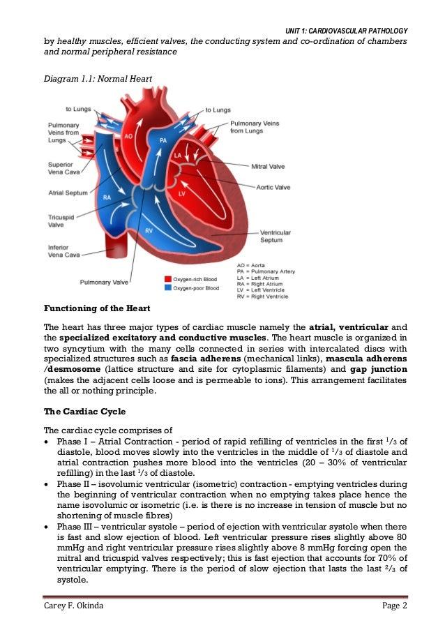 Cardiovascular System Pathology 2014v2 Edited By Drjennings Argwings
