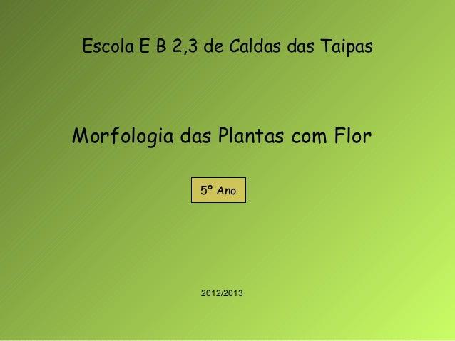 Escola E B 2,3 de Caldas das TaipasMorfologia das Plantas com Flor               5º Ano               2012/2013