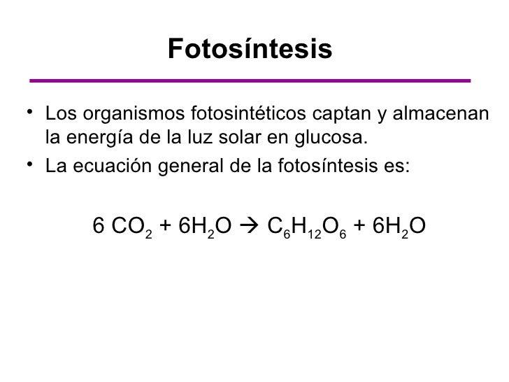Fotosintesis y su ecuacion 64