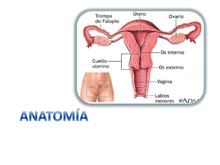 Fantástico Anatomía Cáncer De Cuello Uterino Composición - Anatomía ...