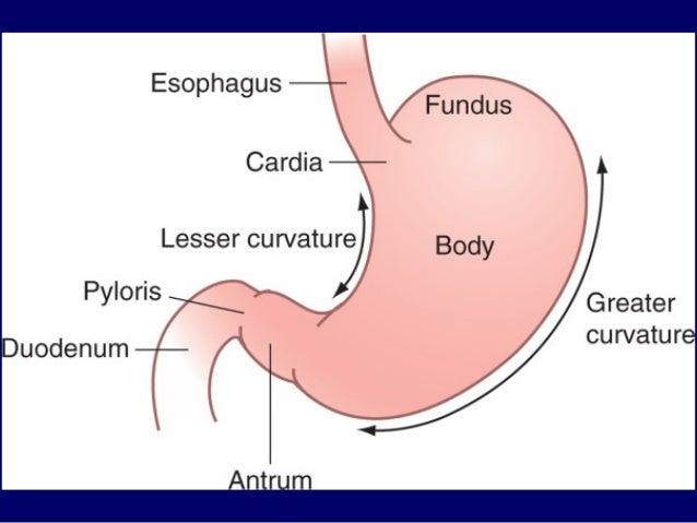 El cáncer de esófago es un cáncer que se produce en el esófago, un tubo largo y hueco que se extiende desde la garganta hasta el estómago.