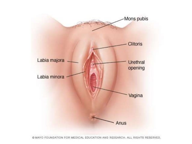 Vagina Pics And Tube For Dsi 84