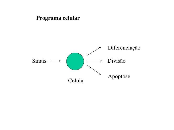 Programa celular                     DiferenciaçãoSinais               Divisão                     Apoptose            Cél...