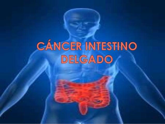 El intestino delgado es  la parte del aparato  digestivo que va desde  el píloro (parte final del  estómago) hasta la  vál...